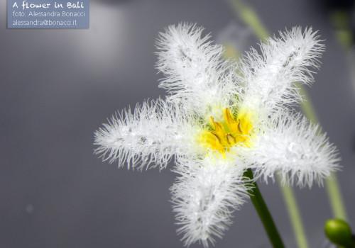 A flower in Bali
