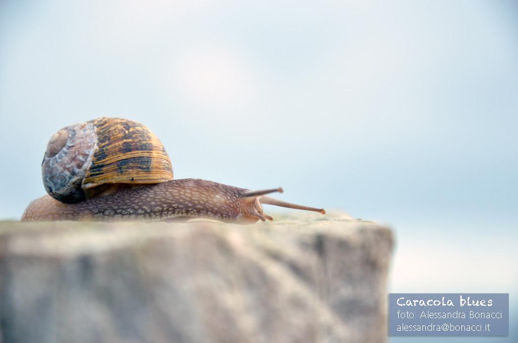 Fotografia natura | Caracola blues | Fotografia di Alessandra Bonacci