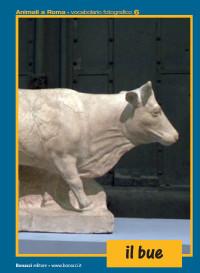 animali roma 4