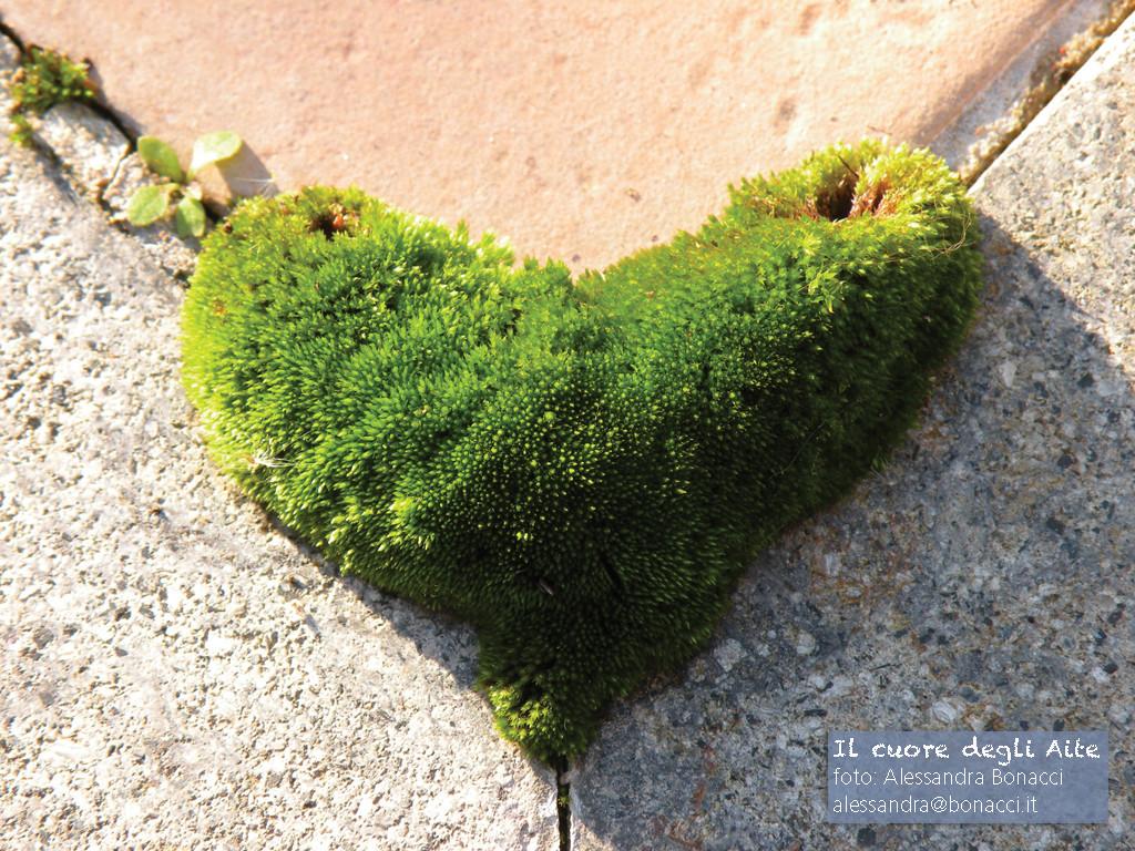 Fotografia natura | Il cuore degli Aite | Fotografia di Alessandra Bonacci