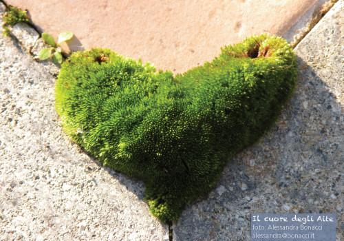 Il cuore degli Aite